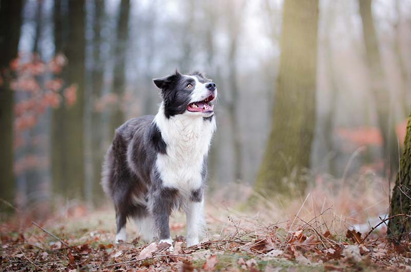 Don't skip winter parasite prevention if you're going to keep pets safe from ticks and fleas!