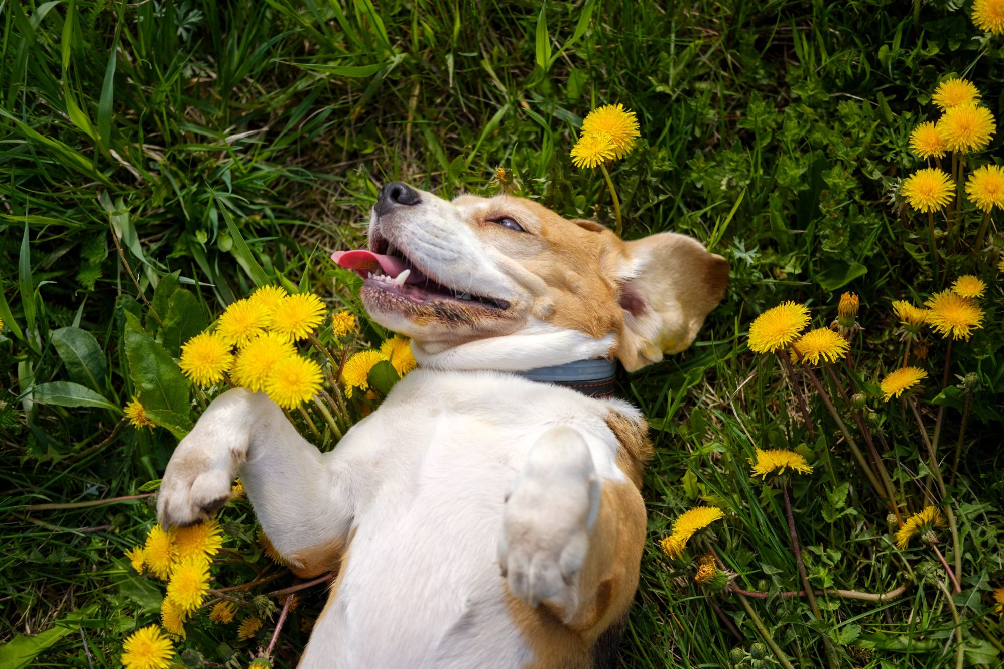 What Are the Most Common Dog Allergens?