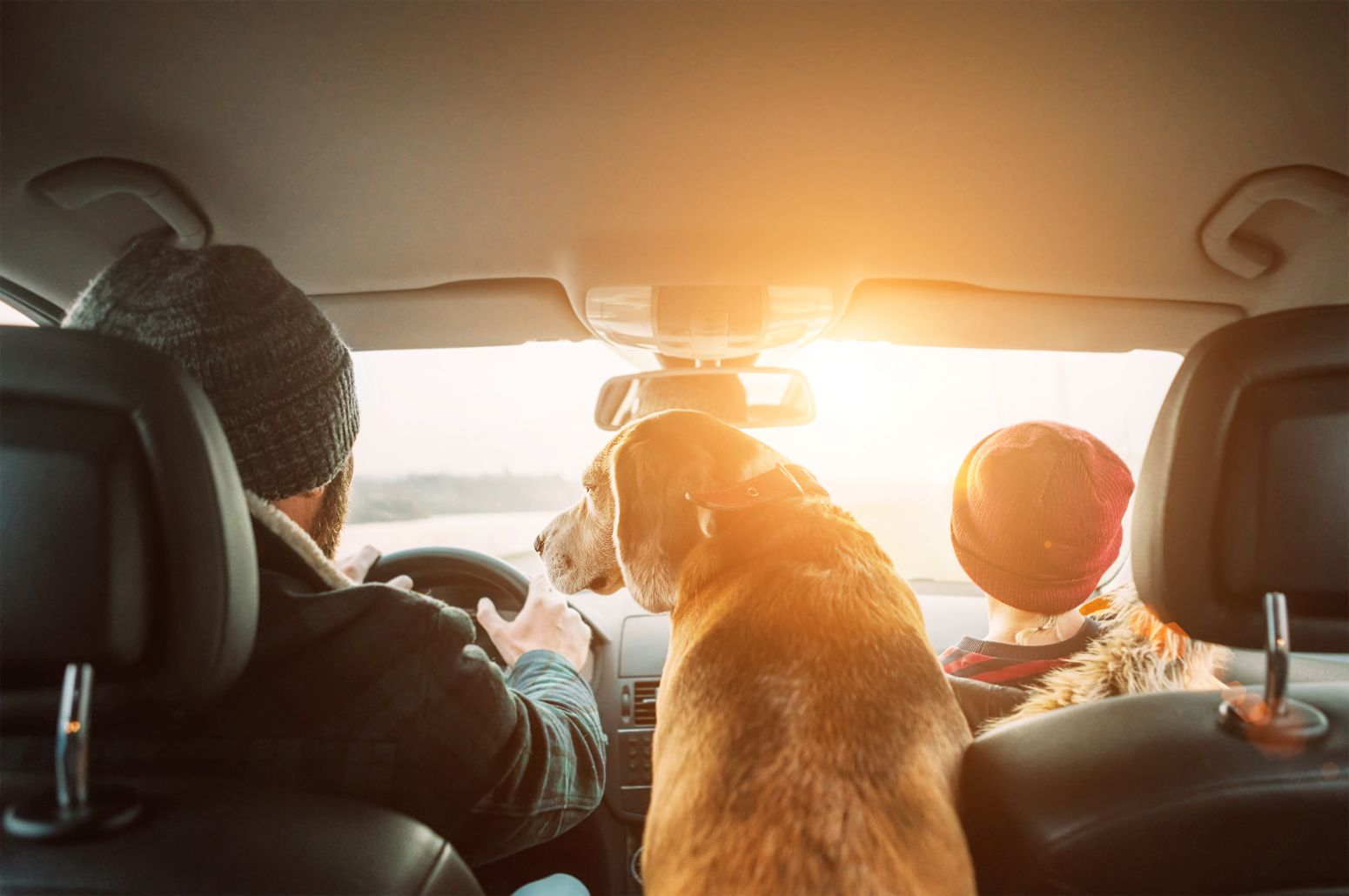 Helpful Safety Tips for Traveling with Pets