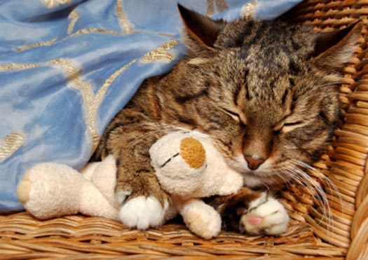 Berks County veterinarian end of life care cat